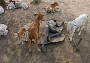 Copiii se spala cu urina de vaca 2